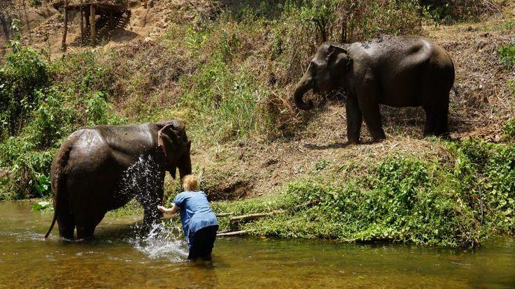 dagje bij de olifanten in Chiang Mai