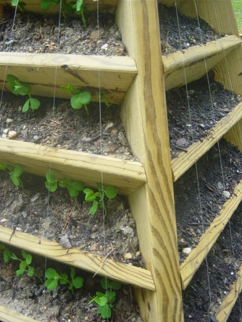 A Few Nails And Fishing Line Can Be Used As A Trellis For
