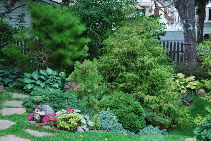 73 best conifers images on pinterest diy landscaping for Cottage garden design zone 5