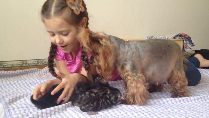 #MissVioletta Новорожденные котята! Боня думает что котята ее!