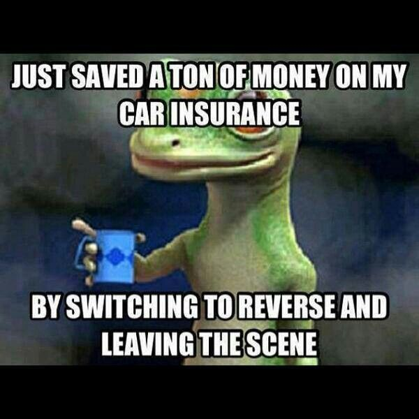 insurance funny pinterest funny pictures and funny stuff