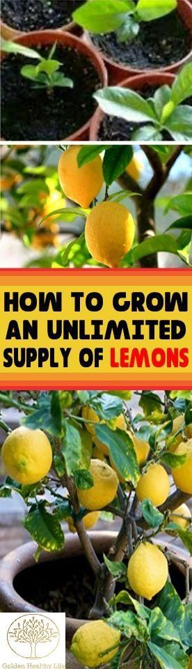 Lemon is not the fruit you will take for a snack between the meals, but they are very powerful when it comes to our health. Because of the high amount of vitamin C, lemons are excellent for treating common sicknesses like flu or cold. But, something you did not know about lemon is that it...