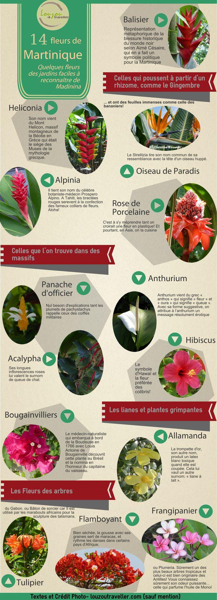 Il y a bien de l'ortie en Martinique même si ce n'est pas tout à fait la même qu'en climat tempéré. Cliquez ici pour connaître ses propriétés.