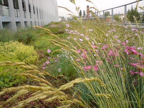 Toiture v g talis e un travail de professionnel pour des toits beaux et colos - Plante toiture vegetalisee ...