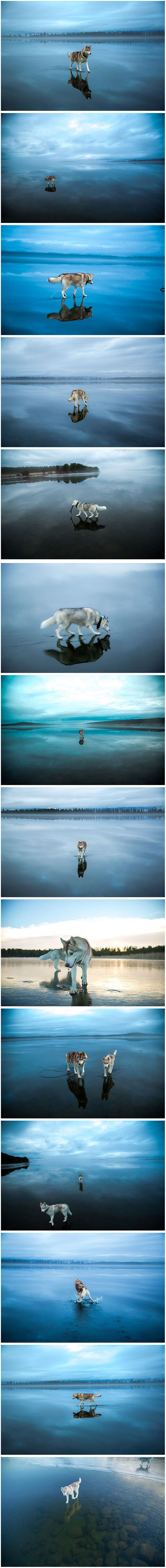 A photographer in Russia who goes by Fox Grom has captured some stunning images…