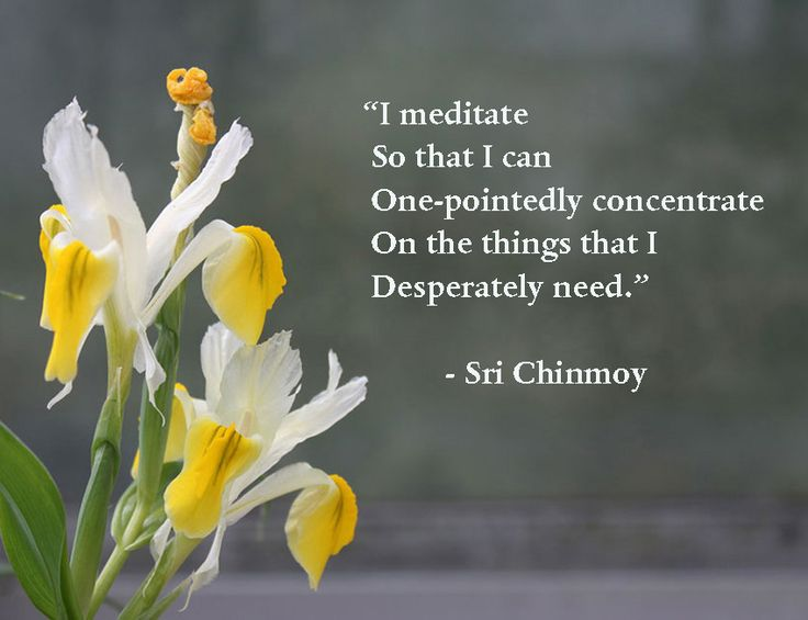 """I meditate so that I can one-pointedly concentrate on the things that I desperately need."" Sri Chimnoy #meditation #meditations #manifestation #awakening #awareness #consciousness #beherenow #oneness #raisevibration #innerpower #powerthoughtsmeditationclub"