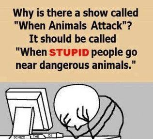 Stupid PeopleAnimal Planets, Stupidpeople, Funny Pics, Funny Pictures, Bears, Truths, So True, Funny Stuff, Stupid People