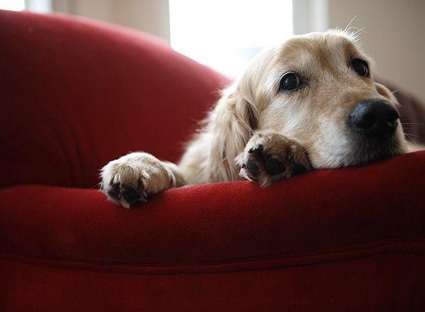 Aprenda a tornar a sua ausência mais tranquila para o seu pet  (Foto: Thinkstock)