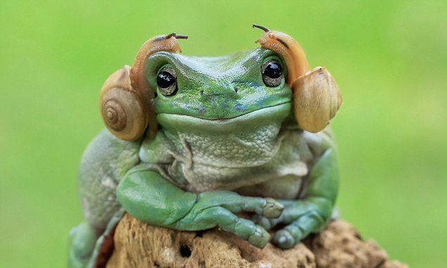The hilarious moment two snails give an amphibian a Princess Leia look