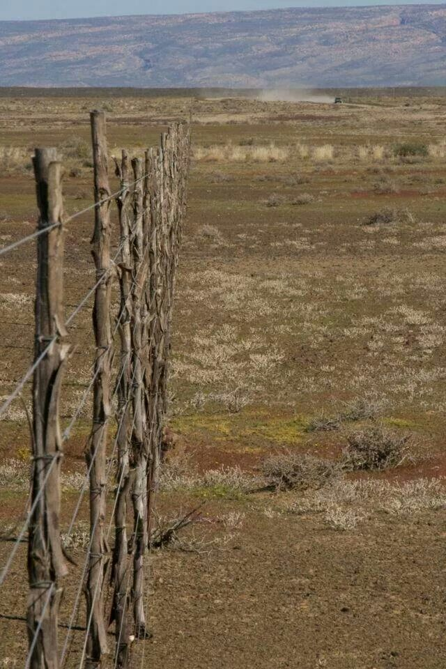 Calitzdorp, farm fence.