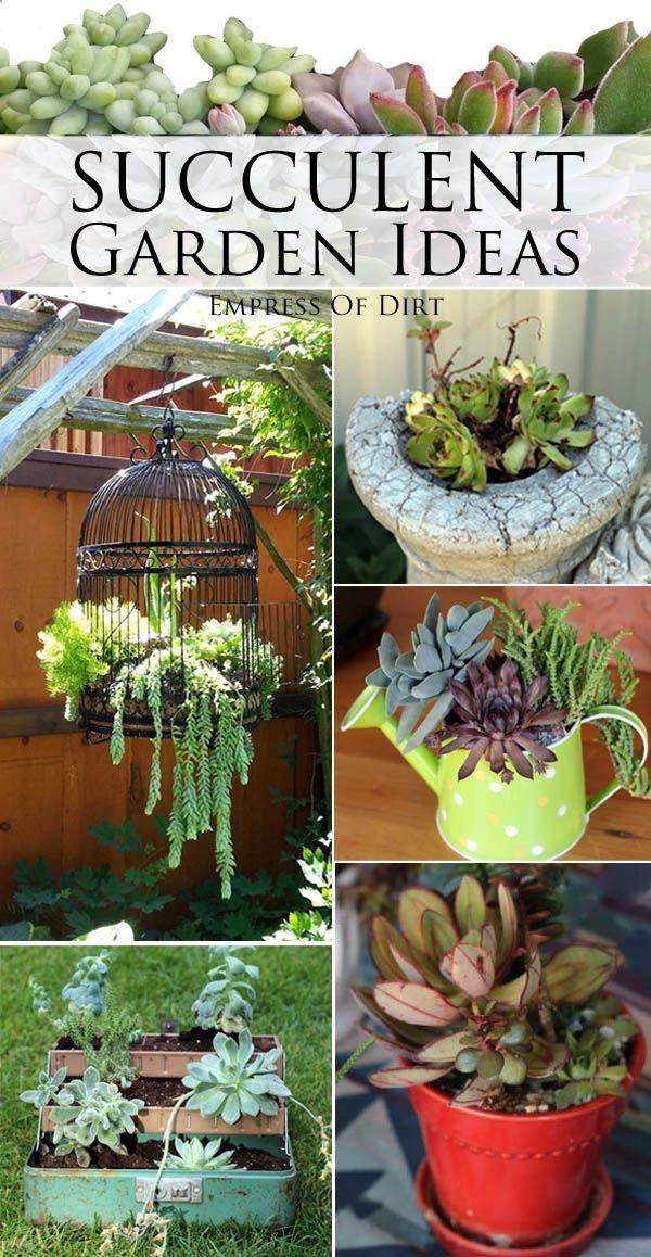 Succulent garden ideas #succulents #gardening #spon #diyideas