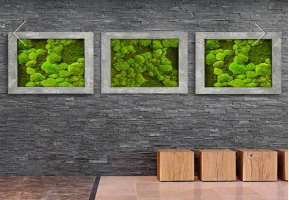 Mosses wall ambius no