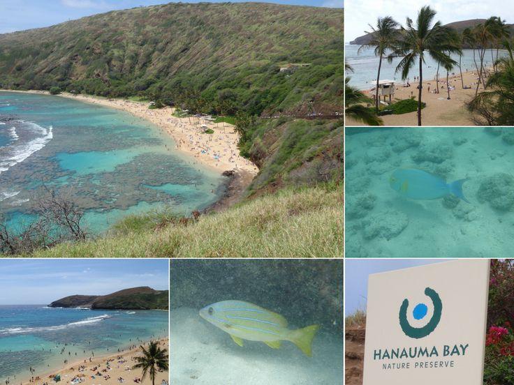 Hanauma Bay - favourite place to snorkle  http://www.thegirlswhowander.com/2017/04/08/highlights-of-oahu-hawaii/