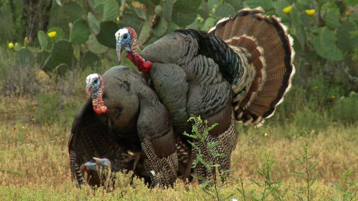 Turkey Hunting Gear and Equipment