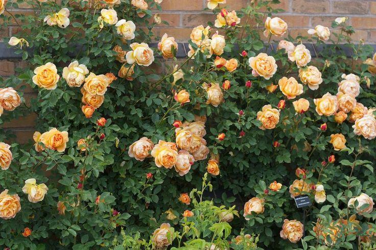 17 best images about j berry ravishing roses on pinterest. Black Bedroom Furniture Sets. Home Design Ideas