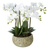 John Lewis Fusion White Artificial Orchid in Clay Pot, 47cm at John Lewis