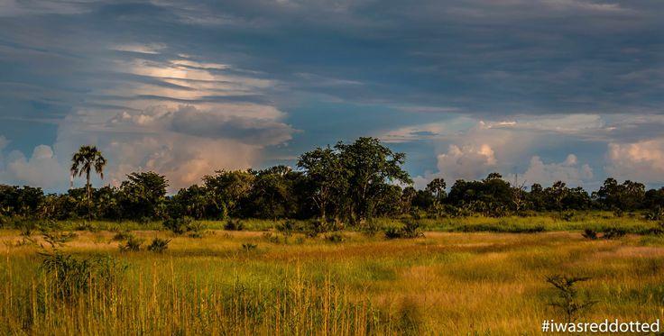 Travel Review: A Photography Safari in Zambia - Nkwali