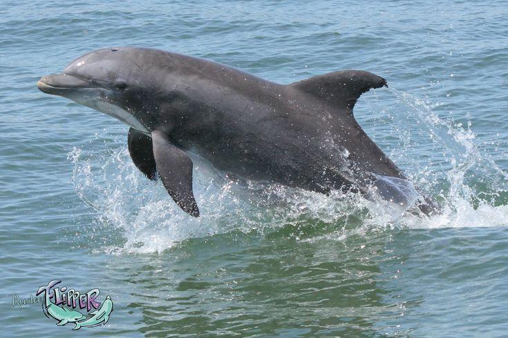 Sunset Dolphin Tours Virginia Beach