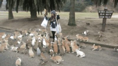 They attack in packs. | PSA: Bunnies Can And Will Take Over The Entire World