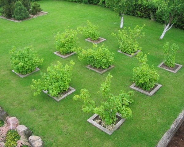 nice square orchard garden patio layouts