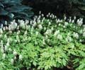 Directory of Groundcovers - From The Ground Up - University of Illinois Extension