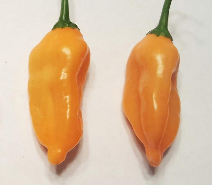 Aji Mango Pepper Seeds