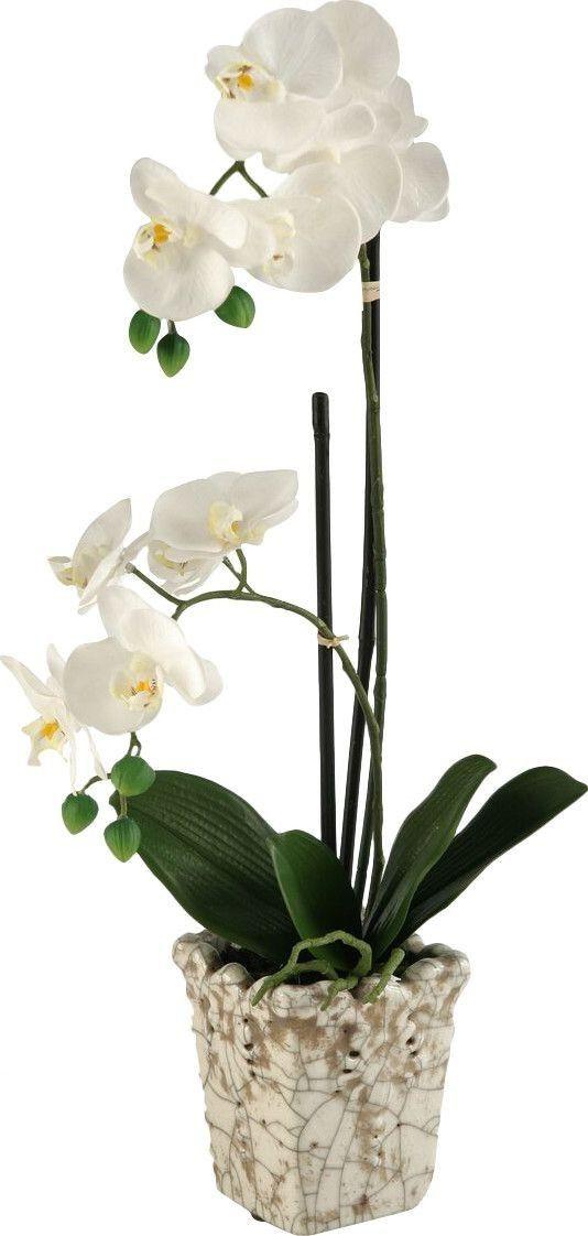 orchidee allergie