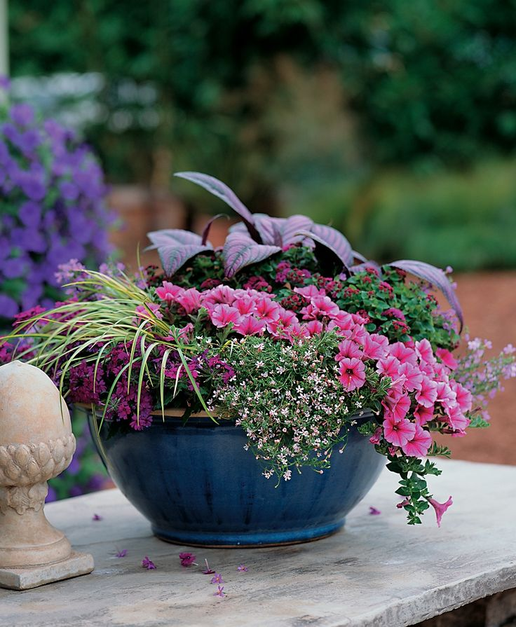 Potted Garden Flowers 103 best container garden recipes images on pinterest | flower