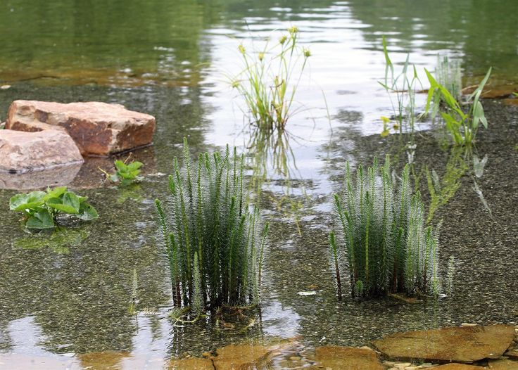 Vodní plochu ve Věžnici nově upravili a nechali tam nasadit rostliny, které by…