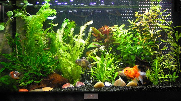Les 25 meilleures id es de la cat gorie aquarium pour for Aquarium design poisson rouge