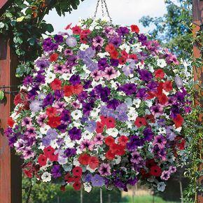 21 Balkonpflanzen Die Zu Ihrem Eingenen Balkon Passen Blume