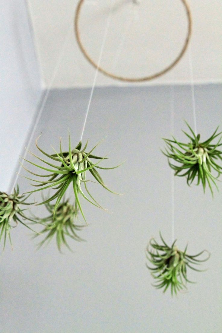 air plant mobile minimalistic living art lifestyle