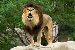 Visit a zoo in Boston. Franklin Park Zoo - Boston, MA - Kid friendly activity reviews - Trekaroo