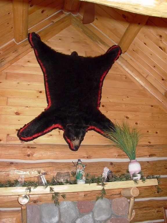 Who Needs A Bear Rug When You Can Hang It On The Wall
