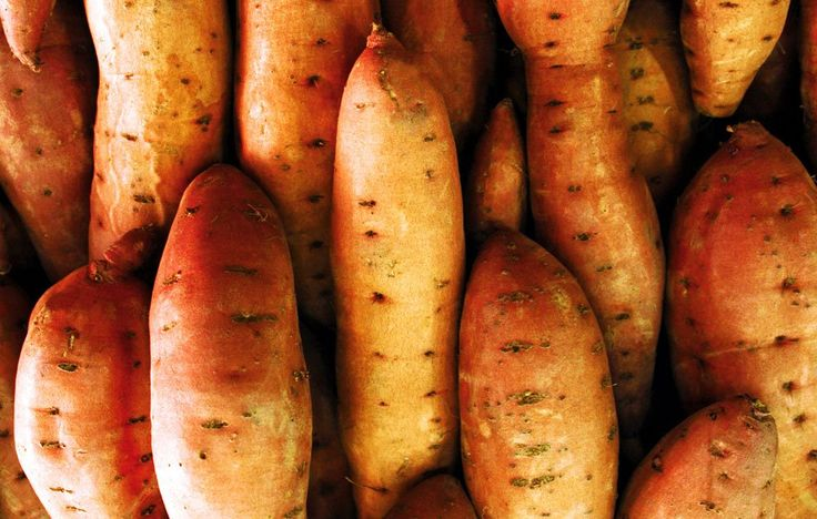 How To Harvest, Cure, And Store Your Sweet PotatoesFollow these 5 steps, and you'll be enjoying your garden's sweet potato bounty for the year to come.