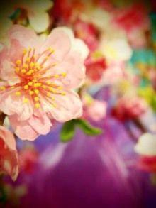 $蜷川実花オフィシャルブログ「人生気合っす!」Powered by Ameba