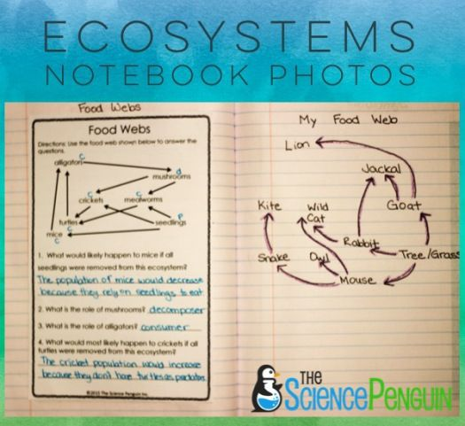 ecosystems questions Develop a complete answer by researching, your discussion question, using the   what are the roles ecological niches and organisms play in ecosystems 4.