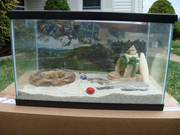 Pet Hermit Crab Tanks hermit crab ...sweet pets ! on pinterest hermit ...