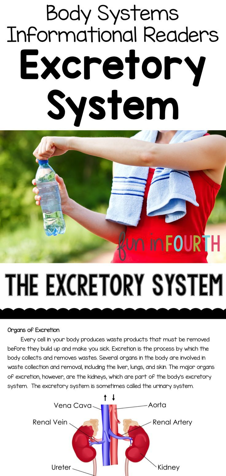 Excretory system colouring pages page 2 - Excretory System Informational Article And Clicker Book