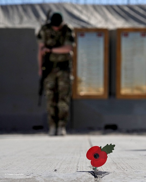 A Royal Marine bows his head during a Remembrance Day service at Main Operating Base Price in Helmand, Afghanistan.