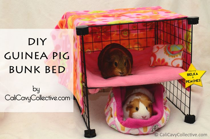 Cali Cavy Collective: a blog about all things guinea pig: How to Build a C Guinea Pig Bunk Bed  Too cute!