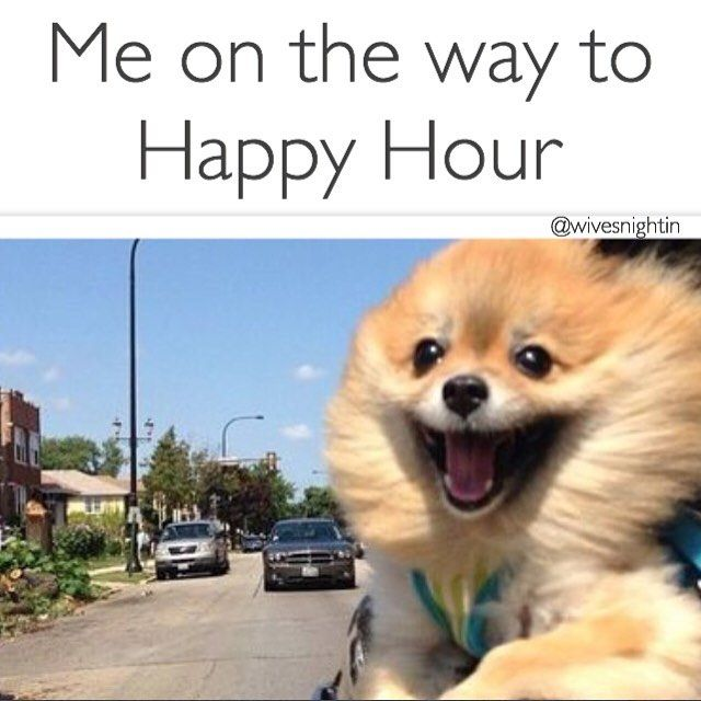 Funny Memes For Happy Hour : Best i made a funny images on pinterest girl