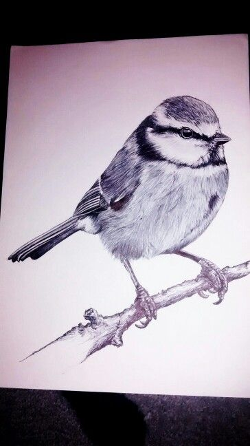 Wildlife bird art, monochrome, pen and ink style, drawn in Biro by Karolina Czerwinska