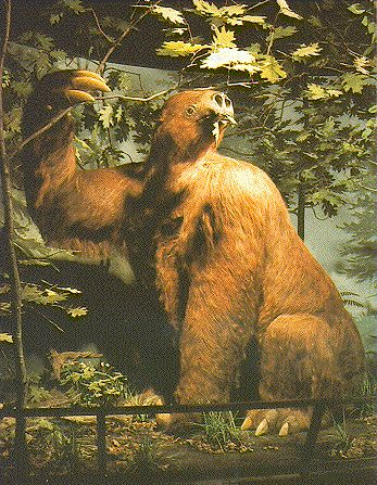 Prehistoric Ground Sloth