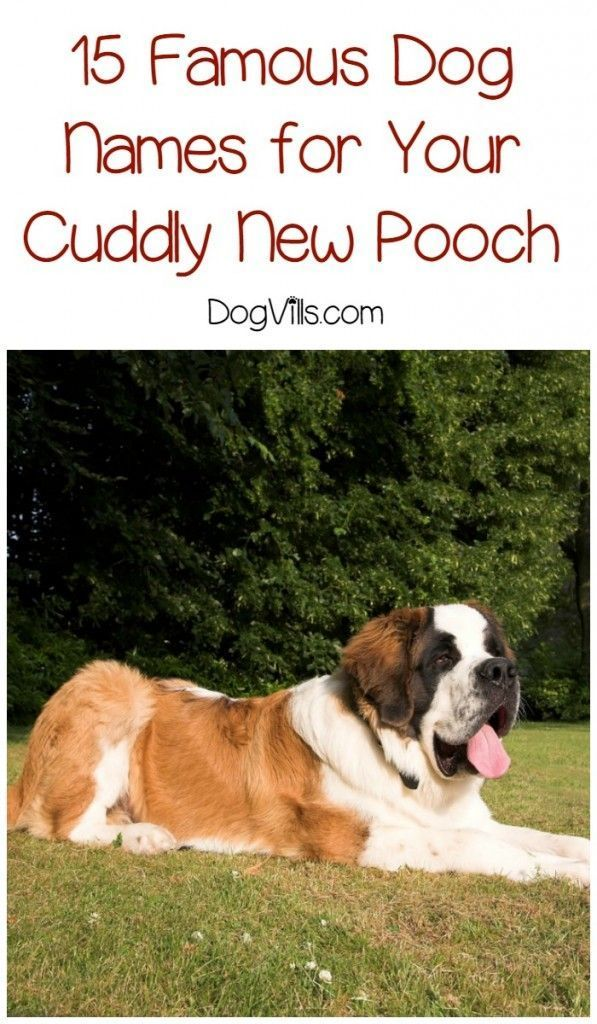 15 Famous Dog Names For Your New Puppy Famous Dogs Dog Names Great Dog Names