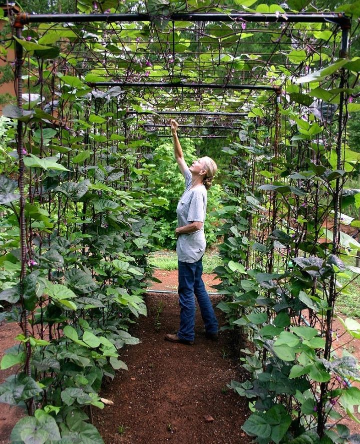 Black plumbing pipe and fence wire create a bean trellis tunnel...  For similar hardware, 3/4-inch Copper 90-Degree Elbows are $1.38 each from Home Depot. A skin of wire mesh covers the skeleton. A roll of 14-gauge Welded Wire (100 feet long by 4 feet wide) is $69.97 from Home Depot.
