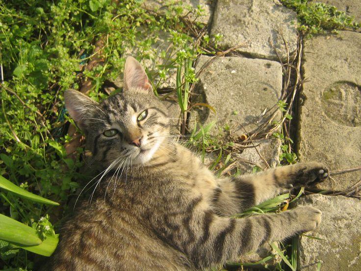 My cat, Felix