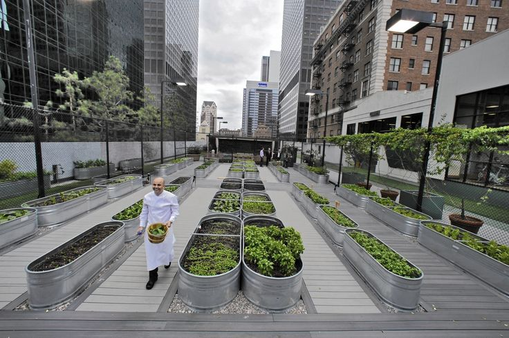 At the  Jonathan Club  downtown, not everyone took it well when an infrequently used paddle tennis court on a fifth-floor roof was sacrificed to gem lettuce, swiss chard and microgreens.