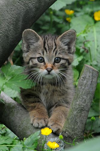 Kitty in the woods.