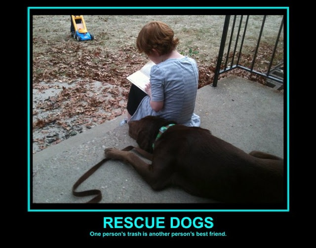 Quotes About Search And Rescue Dogs